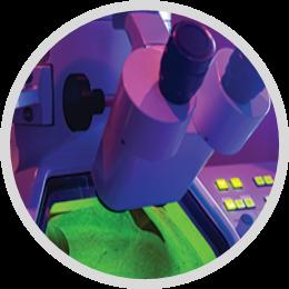 Applicazione automatizzata della fase del microscopio