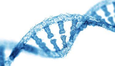 DNA 서열 결정